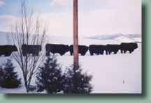 High Tide Ranch is a working cattle ranch located just outside beautiful Steamboat Springs, Colorado