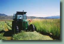 Cutting hay at High Tide Ranch, just outside of Steamboat Springs, Colorado
